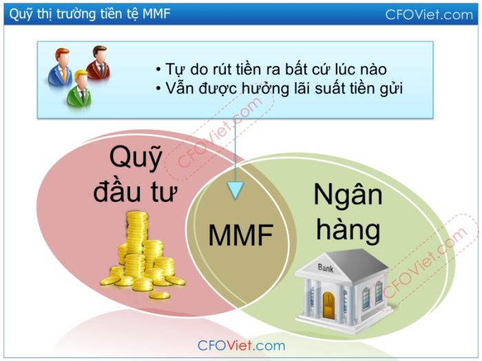 quy-thi-truong-tien-te-mmf